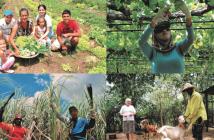 Agricultura Familiar Pernambuco