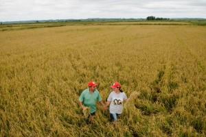 Plantação de arroz orgânico no RS. Foto: Alex Garcia/MST