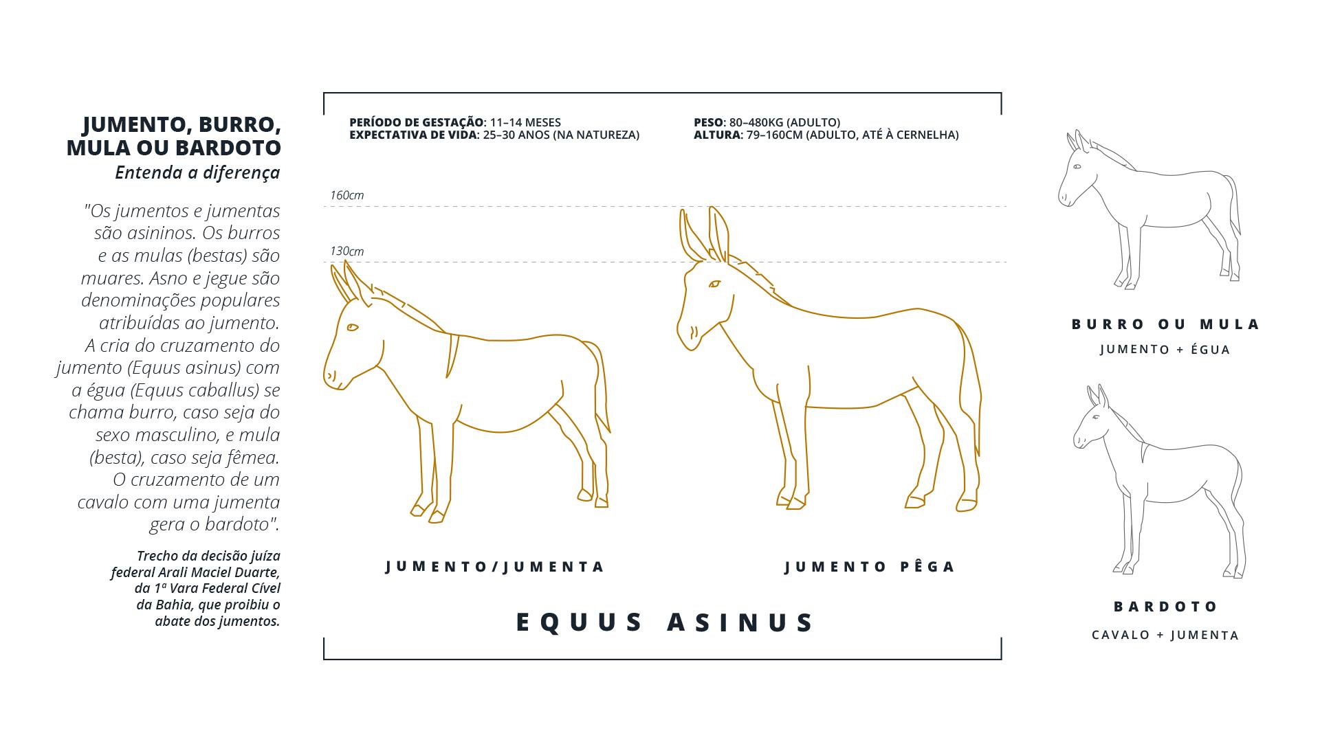 infograficoJumentos1