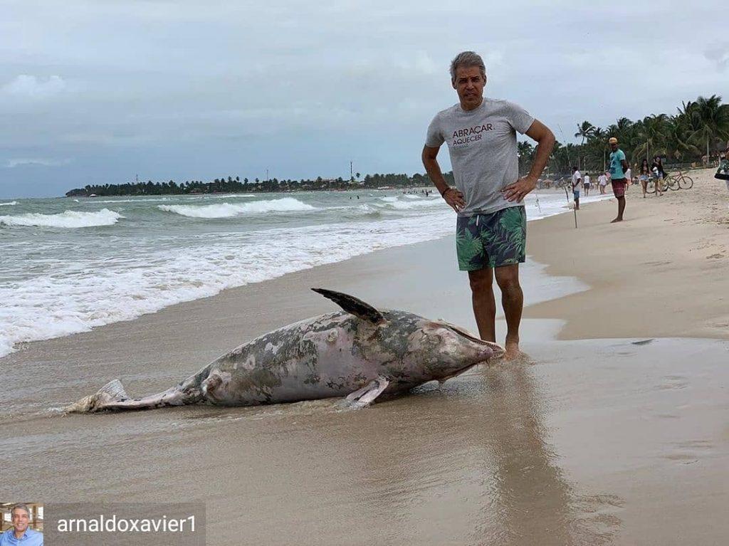 Golfinho morto