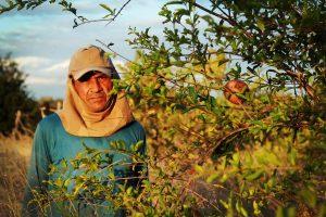 José Soare cultiva mais de 13 variedades de frutas e legumes
